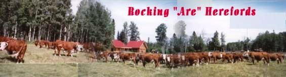 2003 New Ranch house and Hereford herd - Click for more info